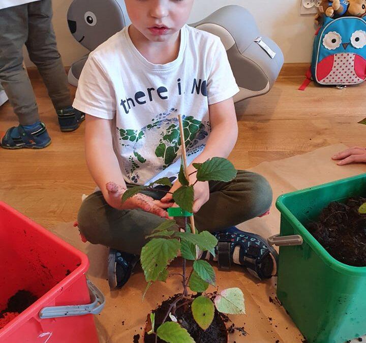 Sadzimy drzewka!